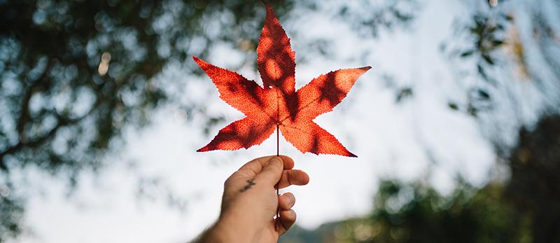 زندگی در تورنتو کانادا